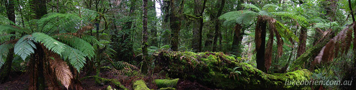 Tassie's Southern Forests – Upper Florentine Valley