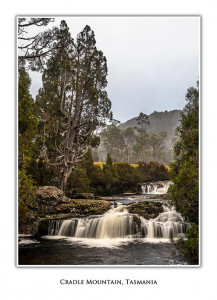 Pencil Pine Falls at Cradle Mountain