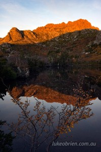 Fagus Cradle Mountain Suttons Tarn