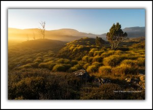 Dawn light, Cradle Valley
