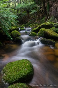 Lovely rainforest cascades on the Groom River in Tasmania's Blue Tier
