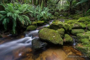 Cascades in the Tasmanian rainforest. Groom River, Blue Tier.