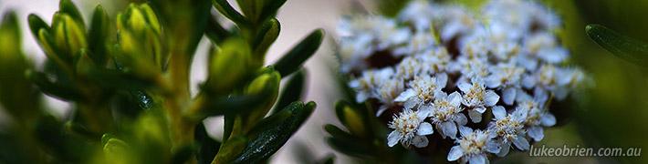Macro Photography – Tasmania's Alpine Plants