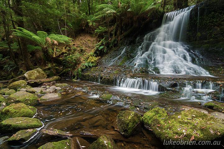 rainforest photos tasmania mt field amp styx valley luke