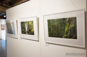 Tarkine photography and art exhibition, Long Gallery, Tasmania. March 6 - 16, 2014
