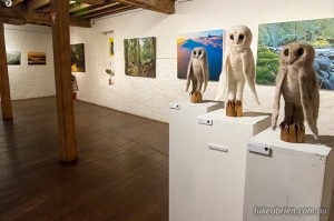 Tarkine photography and art exhibition Tasmania