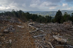 Tarkine rainforest logging Tasmania