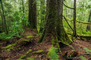 5 day Tarkine Rainforest photography tour April 2017