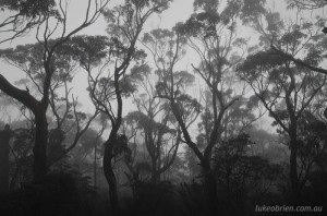 Gums & mist on Bishop & Clerk, Maria Island