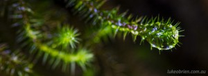 Macro forest detail - Snug Falls