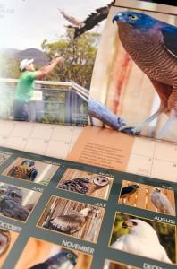 Raptor & Wildlife Refuge of Tasmania 2014 Calendar