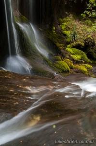 Sub-alpine rainforest of myrtle and pandani