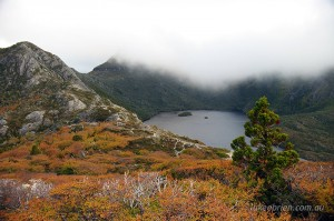 Autumn in Tasmania - Fagus, Cradle Mountain