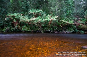 Tasmanian photography workshops – Mt Field & Styx Valley