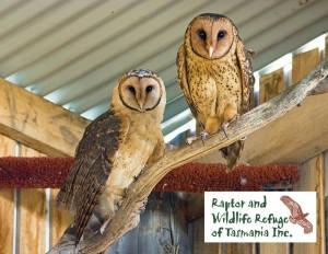 Raptor Refuge Tasmania Postcards: Masked Owl (9814)