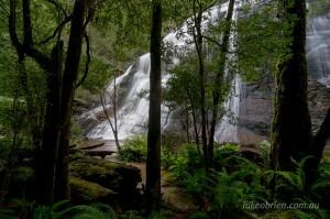 McGowans Falls Tarkine