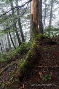 Forest scene, Mt Taishaku Fukushima