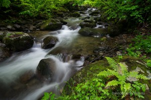 Forest stream at Nanairi, Oze National Park