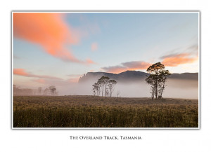 Greeting Card Pelion Plains Overland Track