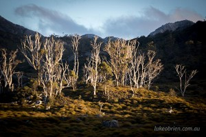 Photography Tour Tasmania Cradle Mountain