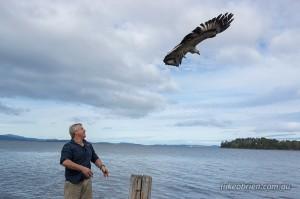 Raptor Refuge Sea Eagle Release