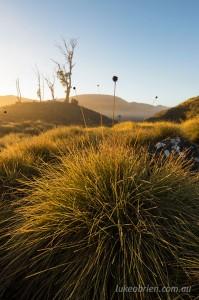 Sunrise, mist and buttongrass. Cradle Mountain, Tasmania