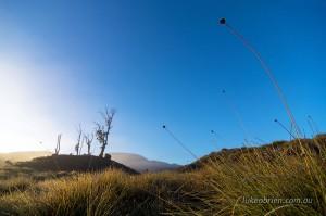 Sunrise Cradle Mountain - Buttongrass