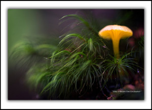 Tarkine Tasmania Fine Art Photography