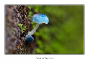 Tarkine Fungi Greeting Card 7428