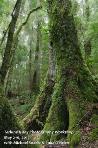 Tarkine Photography Workshop Tasmania