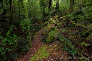 The Whyte River walk in Tasmania's Tarkine near Corinna