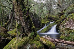 Tasmanian Rainforest Great Western Tiers