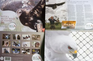 Tasmanian Raptor Refuge Calendar 2015