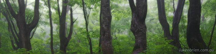 Nakajimadai Recreation Forest: Meeting the King of the Japanese Beech