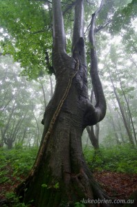 Nakajimadai recreation forest Akita