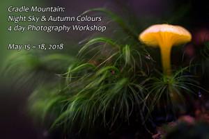 Autumn fungi photography workshop Cradle Mountain
