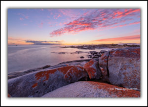 bay-of-fires-sunrise-gardens-1165