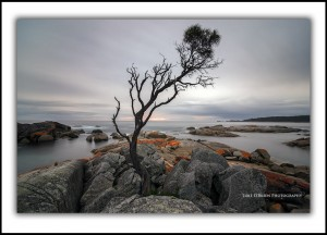 L 116: Tree at Dawn, Binalong Bay (Landscape)