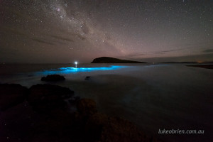 bioluminescence tasmania south arm