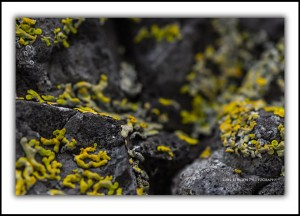 Bruny Island, lichen macro abstract photos Tasmania