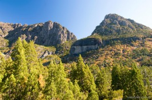 Autumn in Tasmania - Fagus at Cradle Mountain
