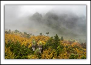 cradle-mountain-fagus-autumn-