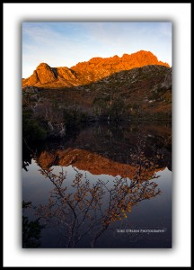 Cradle Mountain fagus Suttons Tarn