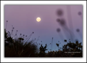 Full moon and buttongrass, Cradle Mountain