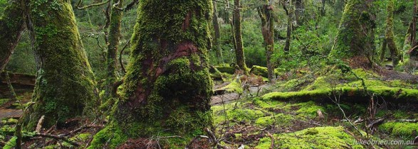 Boardwalk through the Rainforest, Cradle Mountain