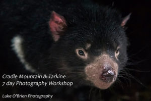 Cradle Mountain and Tarkine Photography Workshop, Tasmania