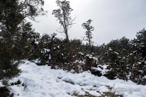 enchanted walk cradle mountain snow