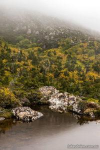 Fagus at Mt Field, Tasmania