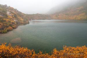 Nothofagus gunii, the fagus. Autumn leaves in Mt Field National Park