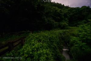 fireflies fukushima japan